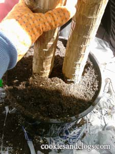 How To Repot Re Pot a Plant in a new container tutorial