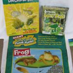 Insect Lore Frog Kit