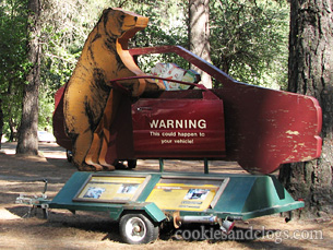 Beware of bears at Yosemite National Park