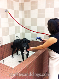 Self service pet wash at pet food express incl cute video pet food express dog wash station solutioingenieria