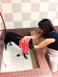 Self service pet wash at pet food express incl cute video pet food express dog wash station solutioingenieria Image collections