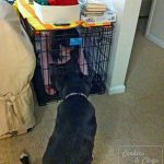 Childproofing the Dog House #WW
