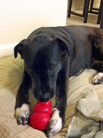 Speckles dog puppy kong peanut butter
