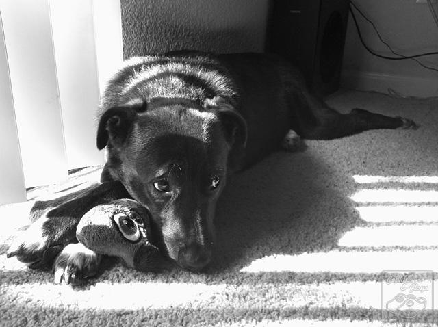 Speckles Dog Puppy sun toy