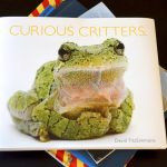 Curious Critters – Not Only for Children