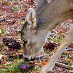 Oh Dear, Oh Deer #WW