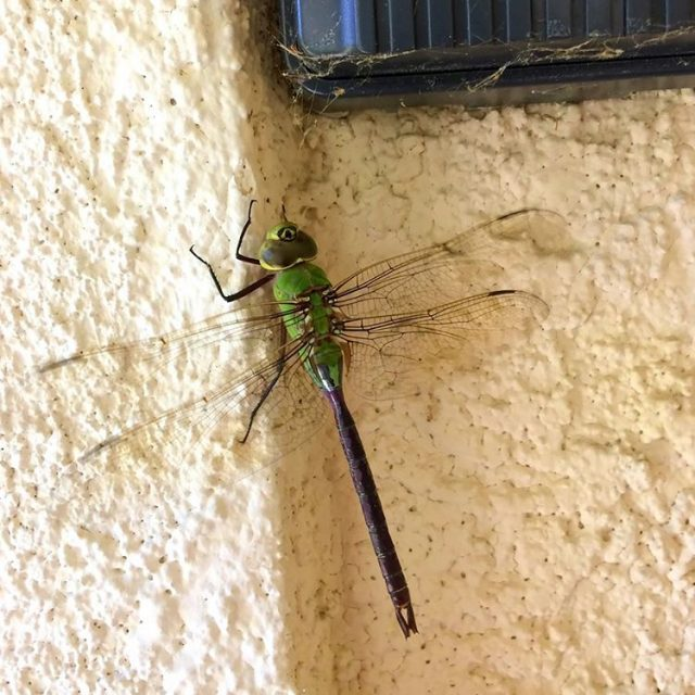 Wah!! Passed this dragonfly while walking down the street Ithellip