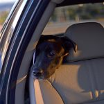 A Sweet Dog's Rear-View Look at Life #Photography