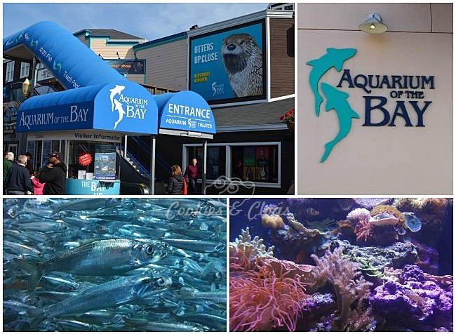 Review Aquarium Of The Bay Near Pier 39 In San Francisco