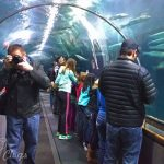 Aquarium of the Bay, San Francisco, CA #SFBay