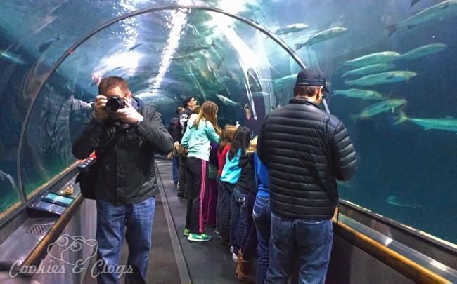 Review Aquarium Of The Bay Near Pier 39 In San Francisco Ca Sfbay