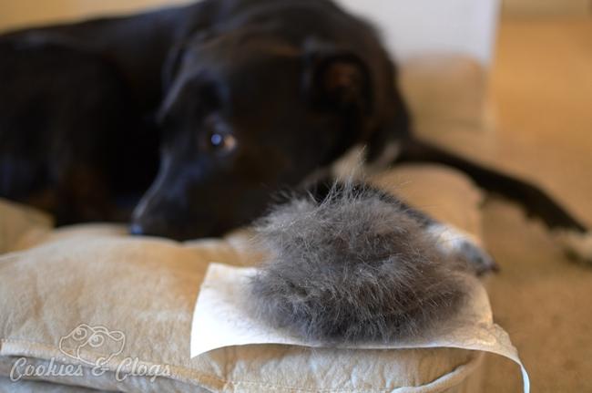 Luma Comfort Ap400w Air Purifier Review Dog Pet Hair Fur