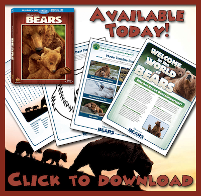 Disneynature's Bears movie now on Blu-ray, DVD, Digital HD, Disney Movies Anywhere + Printable Activity Sheets #DisneynatureBears #spon