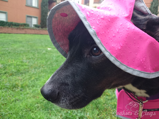 10 Beginning Photography Tips for Kids – Sony Xperia Z3v sample of dog in rain with raindrops on nose
