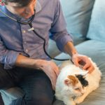 VetPronto Mobile Vet Services – Veterinarian Visits at Home