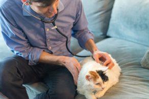 VetProto Mobile Veterinary Service – Home Vet Visits in San Francisco