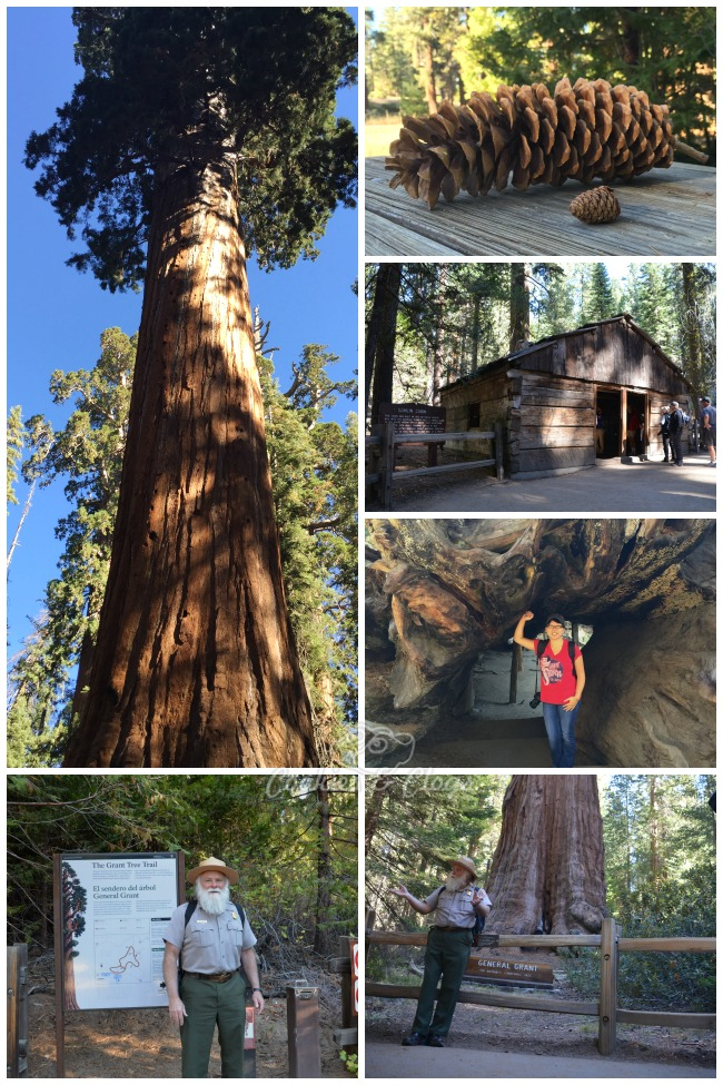 Kings Canyon National Park is in California. Use these travel ideas to decide what activities and things to do and see where you can enjoy family friendly hiking among nature.