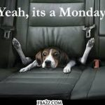 Quotes | Motivational Monday | Funny but cute quote about life. Feat. adorable puppy in a car seat.