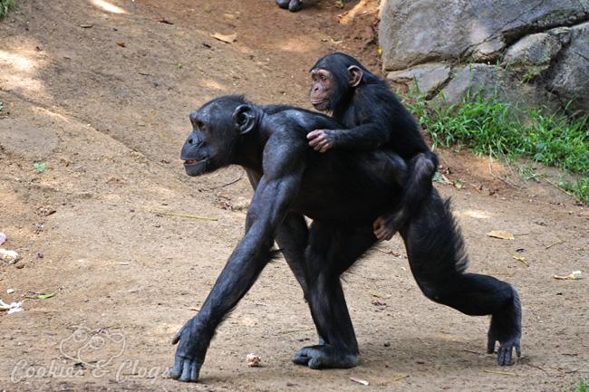 Monkey Kingdom Baby Monkey Monkey Kingdom | Nature
