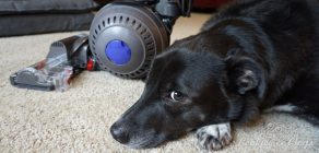 Home   Housecleaning   Technology   Electronics   The new Dyson Ball Animal upright vacuum is out but does it work well? Find out in this review featuring our family dog!
