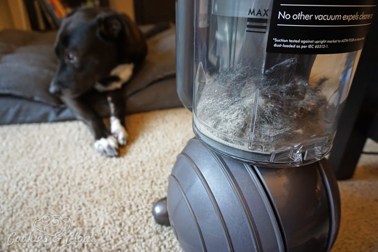 How To Pick Up Dog Fur Amp More W Ease Dyson Ball Animal