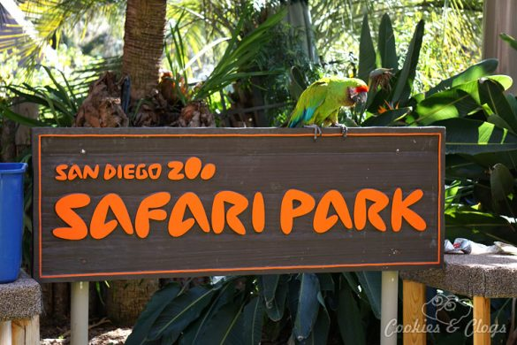 Nature Photography | Our last visit to San Diego Safari Park was amazing. We were able to capture some gorgeous and fun photos as the animals were extra active that day. The highlight was our ride on the Africa Tram tour. Safari Park sign with green macaw