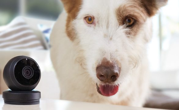 Pets   Cats   Dogs   May is National Pet Month and Logitech is partnering with San Francisco SPCA and Boston's MSPCA-Angell. When you adopt a cat or dog from either of these campuses in May, you will receive a Logi Circle to keep tabs on them. See details here.