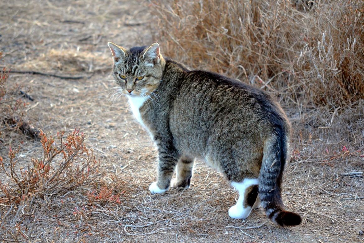 how to litter train a feral cat