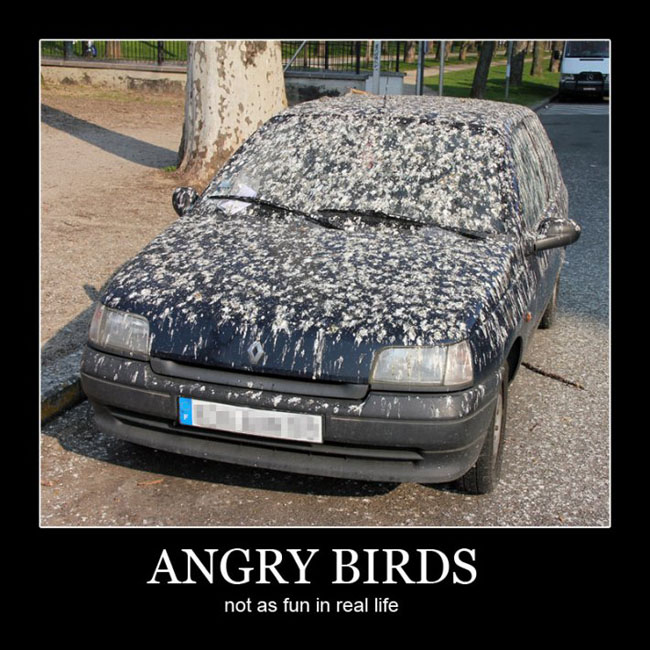 Funny Quote Angry Birds Car Bird Poop Madness