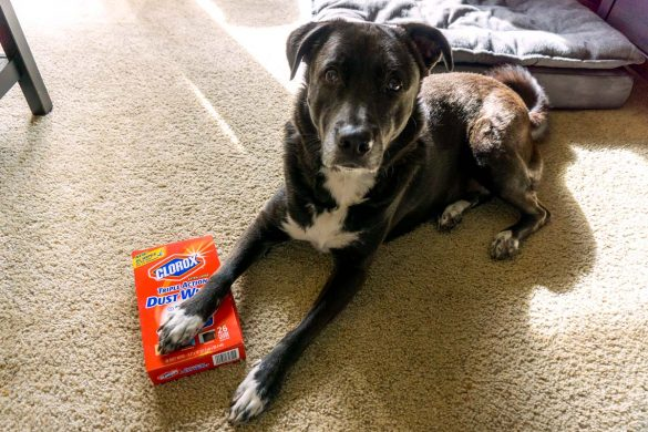 Cookies & Clogs | Pets | It's so nice having a dog but it's not so nice having to deal with stray pet hair everywhere. See how Clorox Dusting Wipes help us with cleanup and dealing with our dog shedding fur.