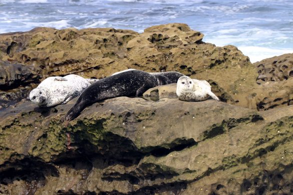 Exploring La Jolla, CA in the 2018 Hyundai Elantra GT. Mother seal and pups