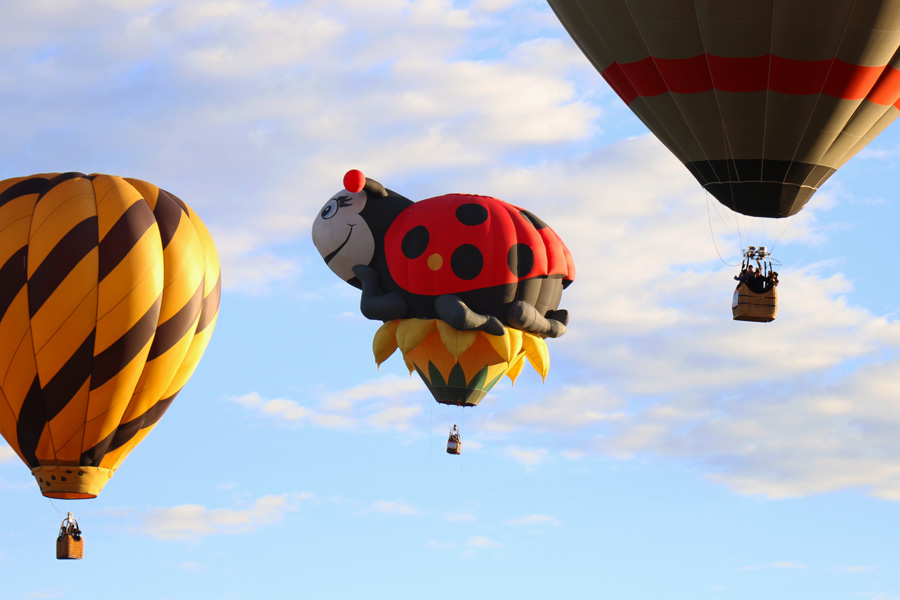 2017 Albuquerque International Balloon Fiesta in New Mexico Special Shapes Rodeo Ladybug