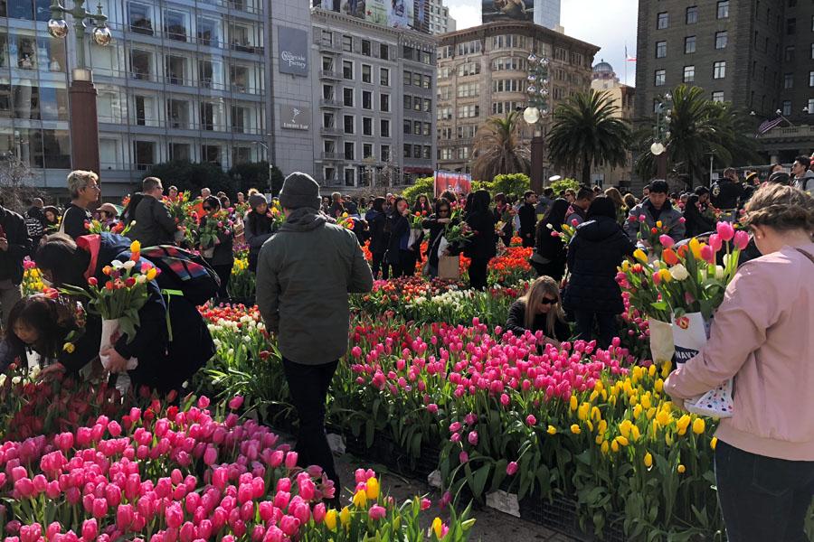 2018 American Tulip Day in San Francisco California at Union Square / Tulpendag San Francisco
