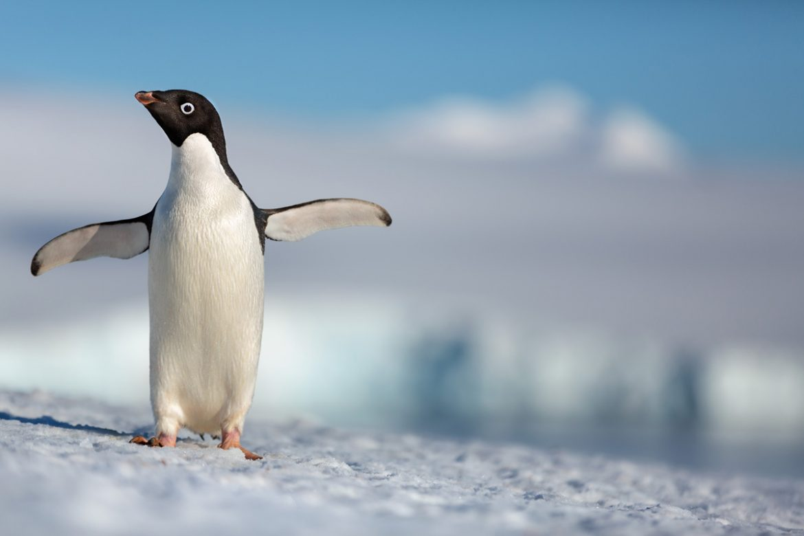 Disneynature PENGUINS new trailer. Release date - Earth Day 2019