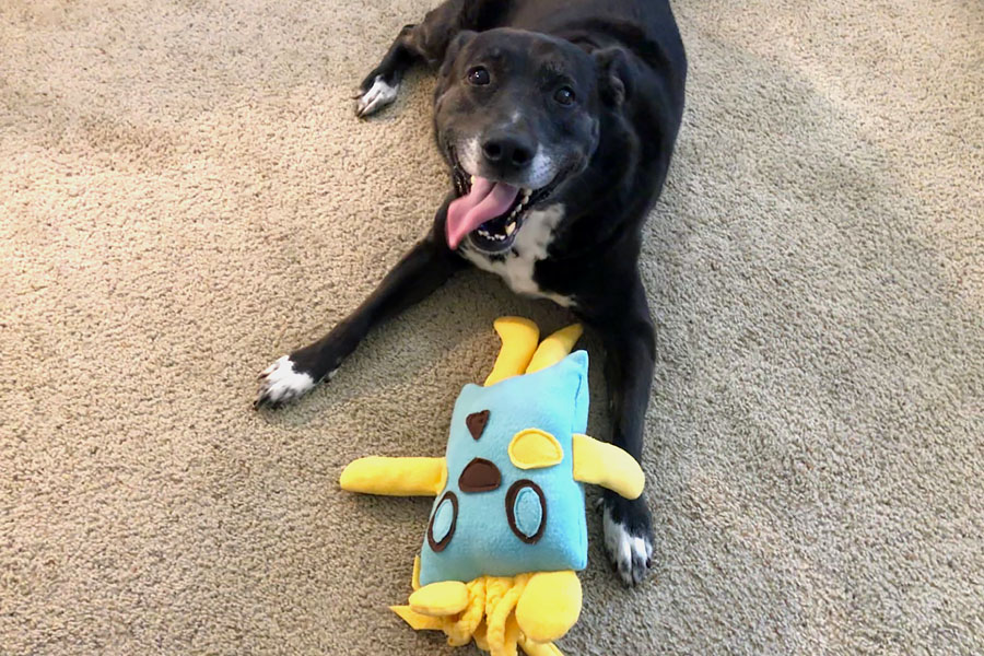 How to Care for a Senior Dog healthcare and wellness - Happy senior dog with homemade plush dog toy