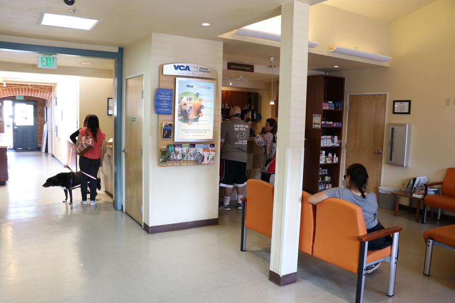 How to Care for a Senior Dog healthcare and wellness - VCA animal hospital san carlos ca