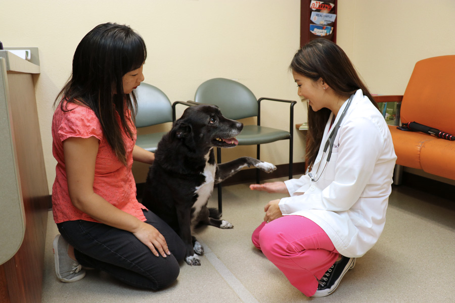 How to Care for a Senior Dog healthcare and wellness - VCA San Carlos Dr Yick handshake during wellness exam with dog