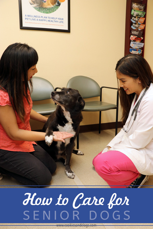 How to Care for a Senior Dog healthcare and wellness - Caring for senior older aged dogs